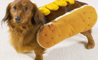 hotdog-pet-costume