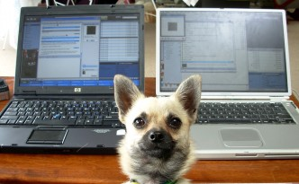 dog with laptops