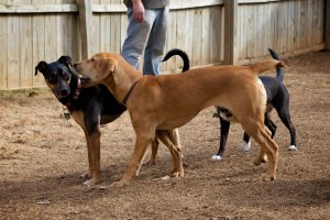 dog boarding business for sale