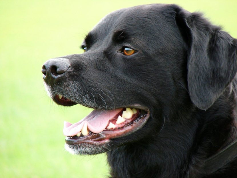 dog-training-courses-in-india